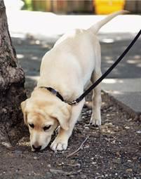 La visión que el cachorro tiene del mundo