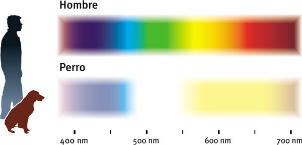 Espectro de colores visibles