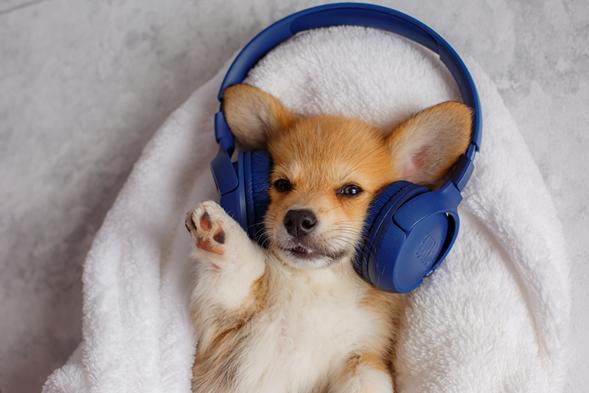 Un oído asombroso