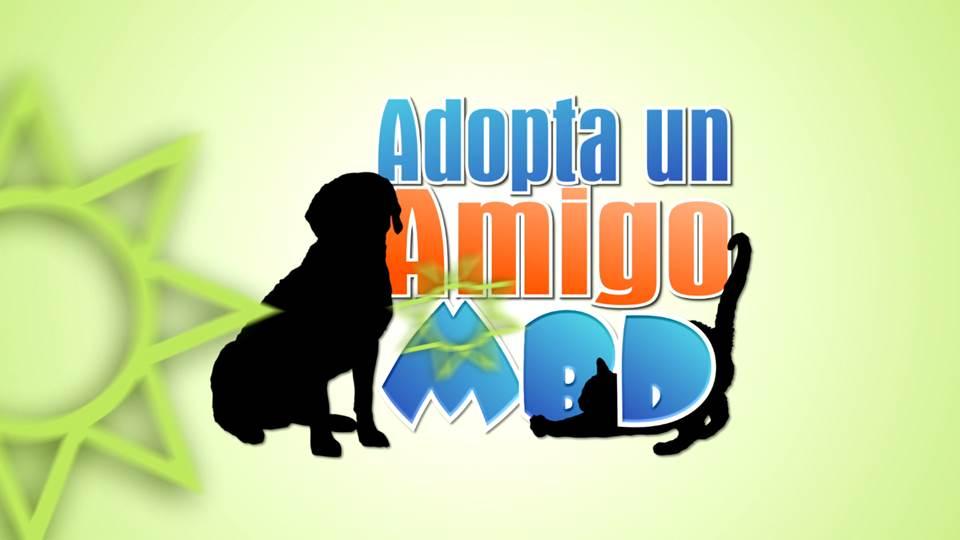 Adopta un amigo MBD: las mascotas también tiene transtornos emocionales